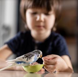 Enfant qui nourrit sa perruche